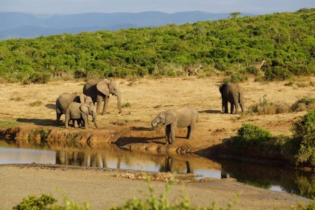 5 days Safari to Lake Manyara, Serengeti & Ngorongoro Crater