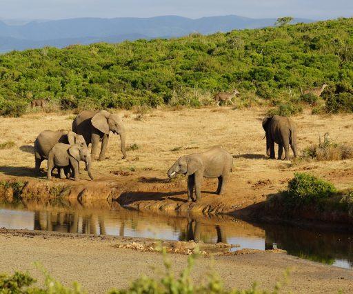 5 days Safari to Lake Manyara, Serengeti & Ngorongoro Crater