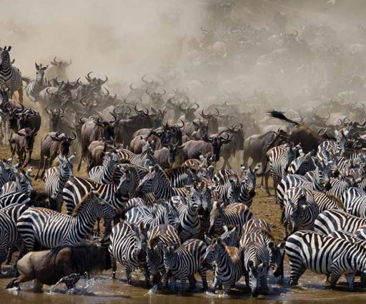 African Safari -- Tanzanian Safari with Safari Heroes