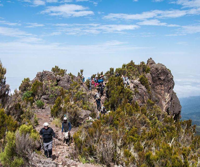 7 Days Shira Route Kilimanjaro Trek