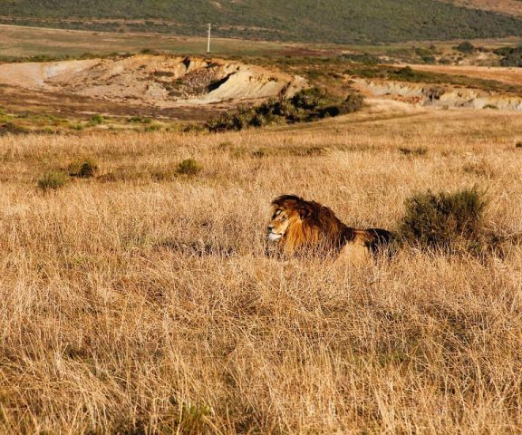 4 Days Safari Tour To Lake Manyara, Ngorongoro & Serengeti