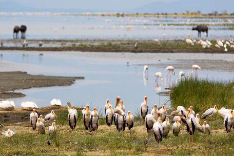 2 days Camping Safari to Lake Manyara & Ngorongoro Crater
