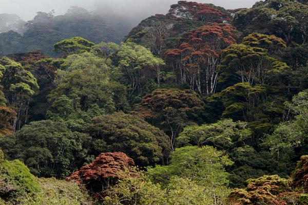 Udzungwa-National-Park-5