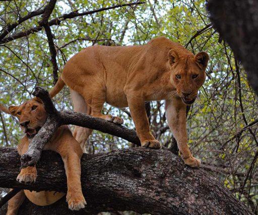 6 Day Safari Ngorongoro, Lake Manyara, Serengeti & Tarangire