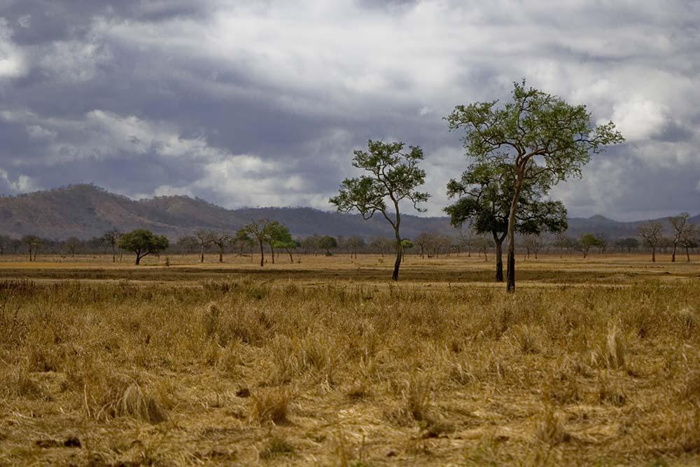 14387358 - savannah in mikumi national park, tanzania