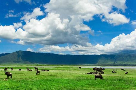 3 Days Safari Tarangire, Ngororngoro & Lake Manyara