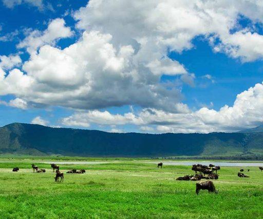 3 Days Safari Tarangire, Ngororngoro & Lake Manyara