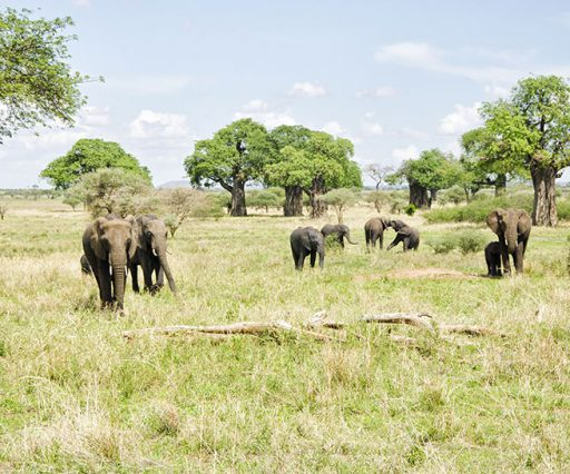 5 Day Safari Tarangire, Serengeti & Ngorongoro