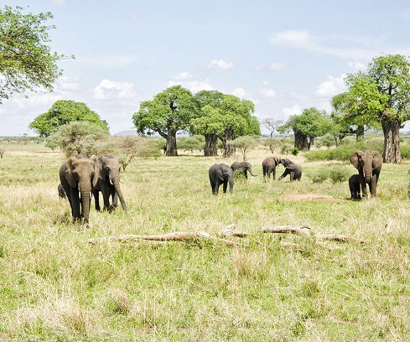 5 Day Safari Tarangire, Serengeti & Ngorongoro